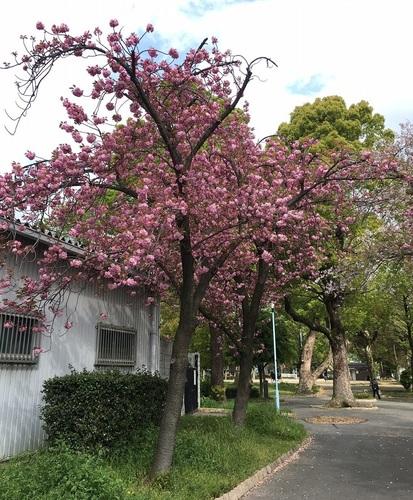 01十三公園.JPG