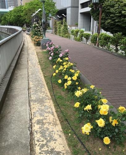 01淀屋橋.JPG