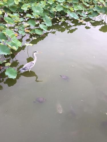 08桃が池公園.JPG