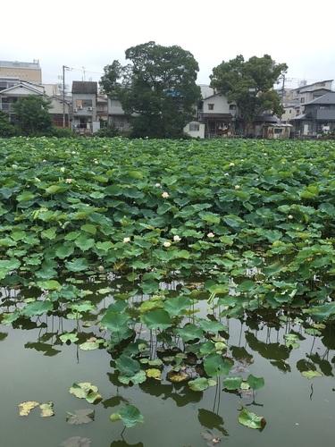 09桃が池公園.JPG