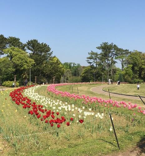 09花壇.JPG