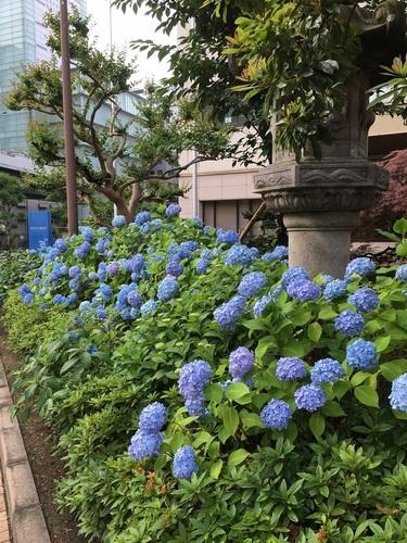 10済生会中津病院.JPG